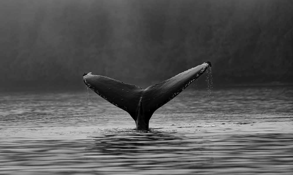 Important lessons retail traders can learn from Bitcoin whales