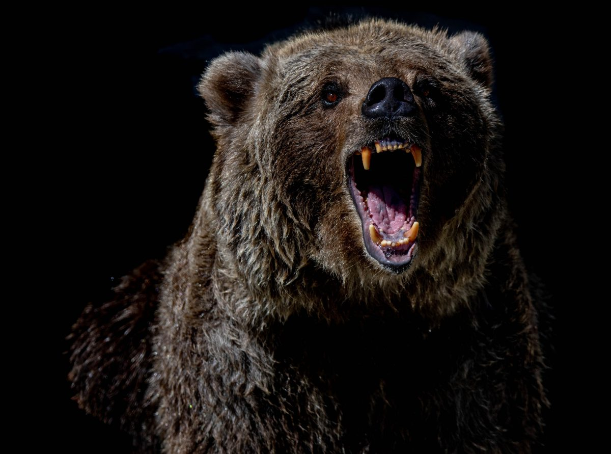 Will there be another year long bear market for Bitcoin?