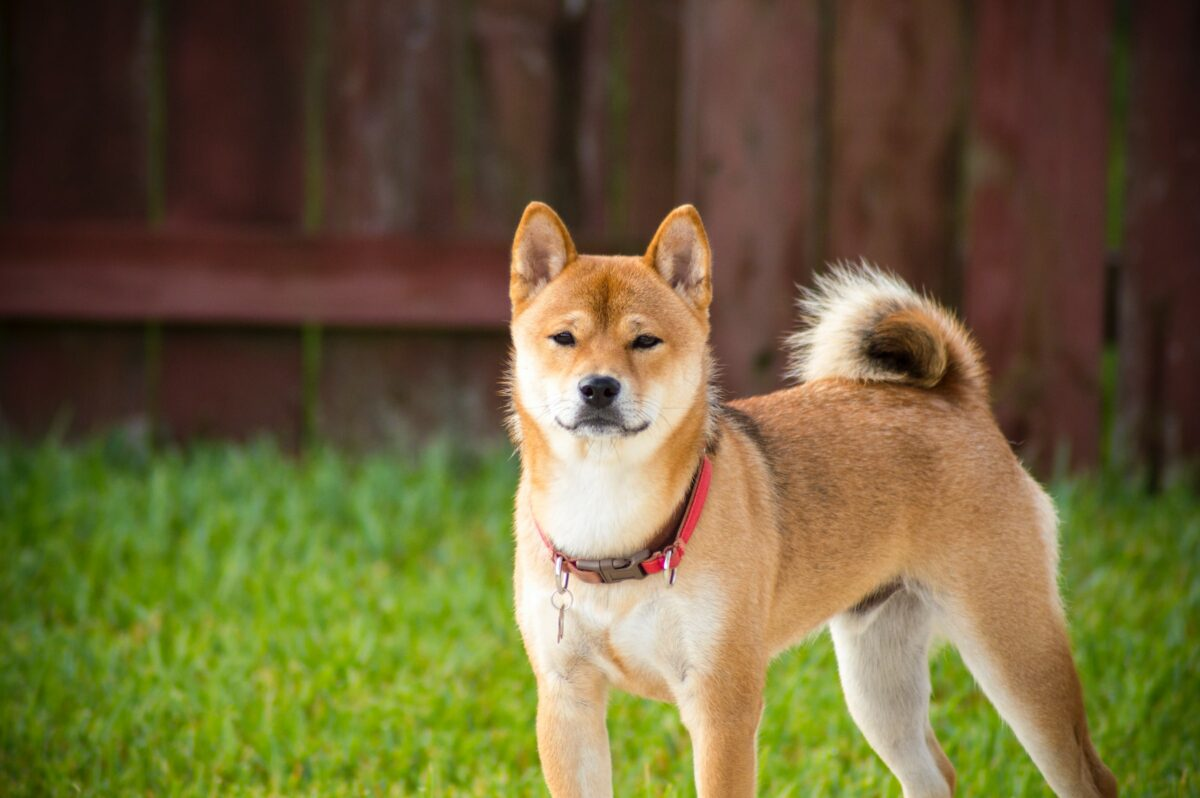 Is DOGE's price rally a speculation or here to stay