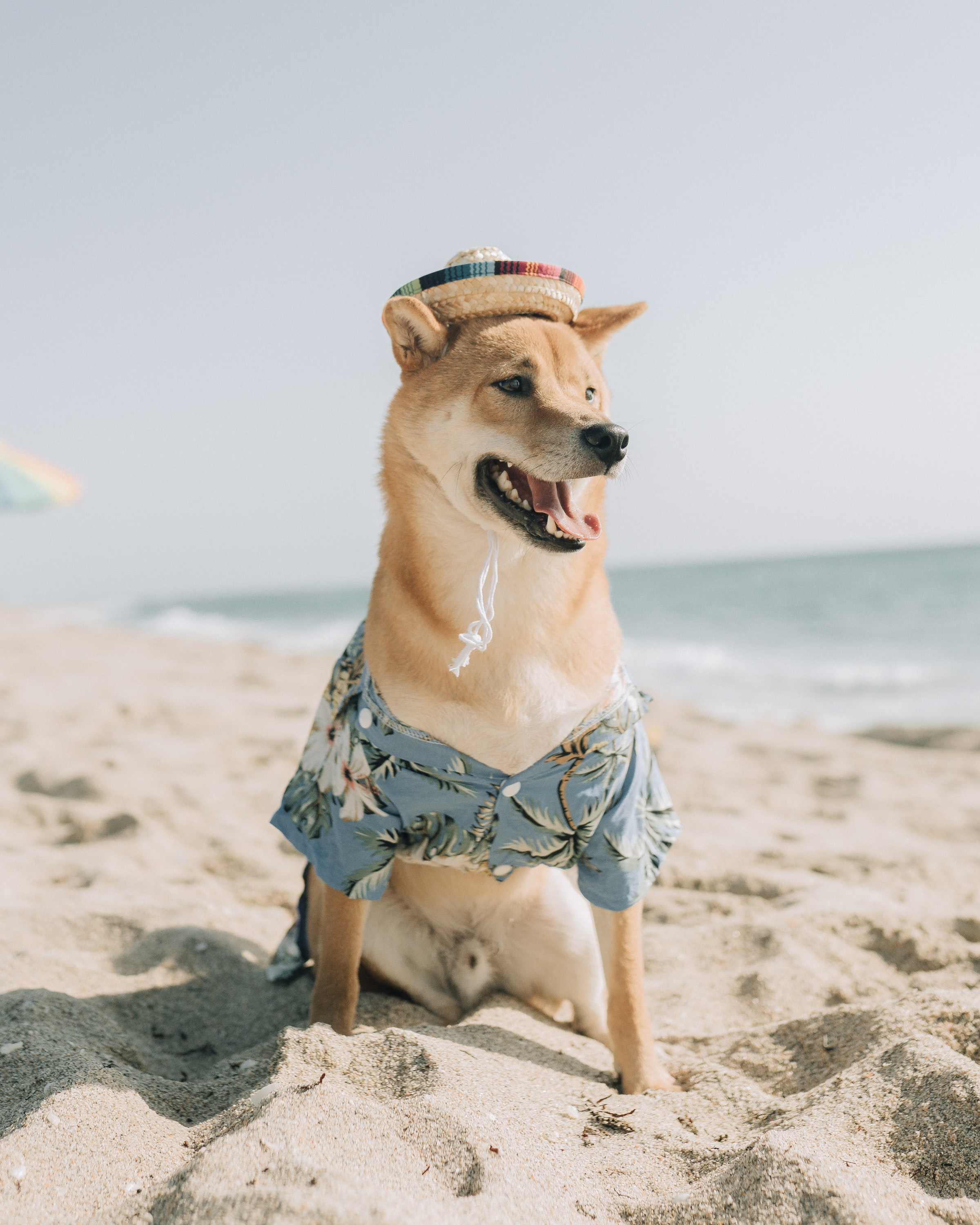 Traders holding Dogecoin, Theta, Binance Coin can expect this move during the week