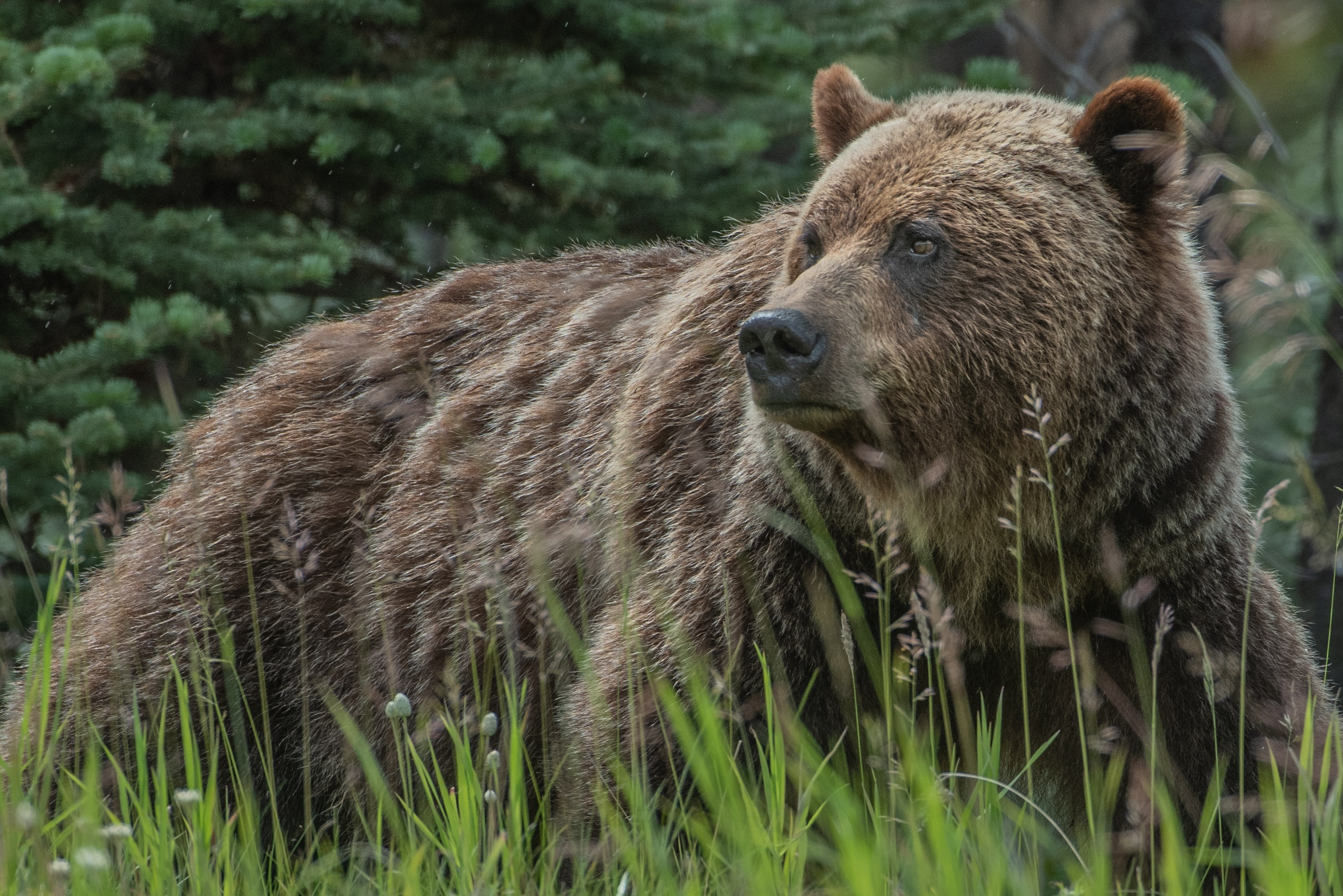 Bitcoin and Ethereum – Assessing whether we are in a bear market or not